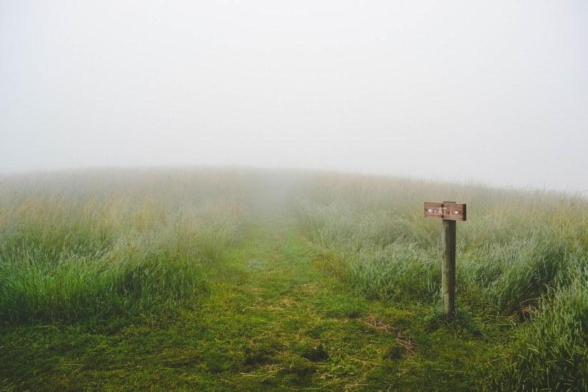 grass-1209945_1920.jpg